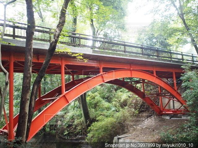 森の中の赤い橋の写真・画像素材[3997899]