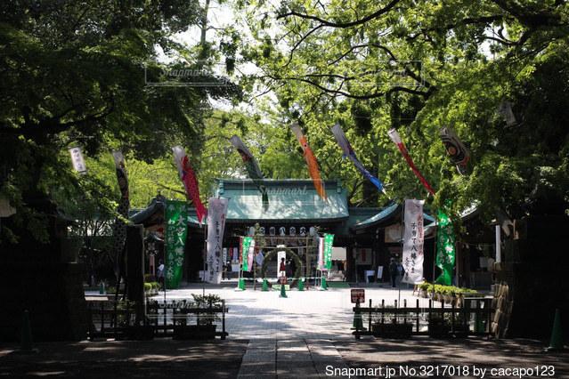 鯉のぼりが揺れる神社の写真・画像素材[3217018]