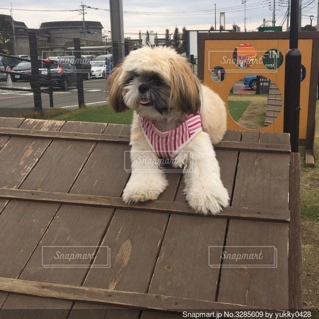 ドッグランで犬を怖がる犬の写真・画像素材[3285609]