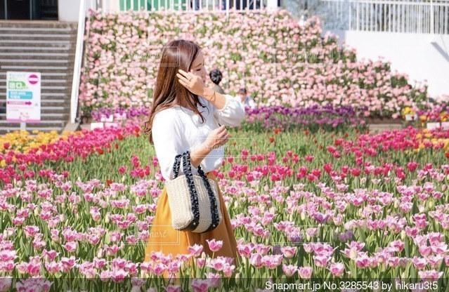チューリップ畑の写真・画像素材[3285543]