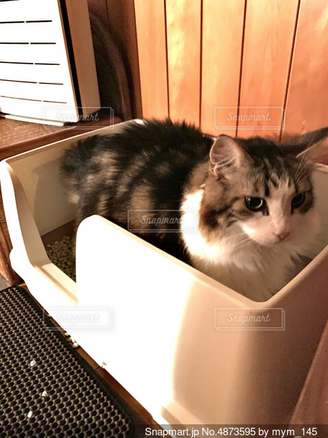 箱の中に座っている猫の写真・画像素材[4873595]