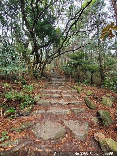 森の中の木の写真・画像素材[3288151]