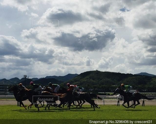 疾走する馬たちの写真・画像素材[3296406]