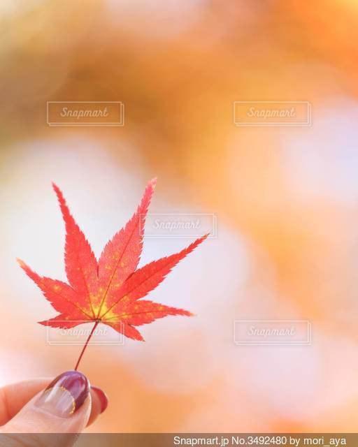 紅葉の写真・画像素材[3492480]