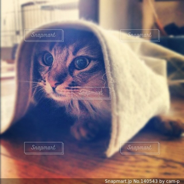 猫の写真・画像素材[140543]