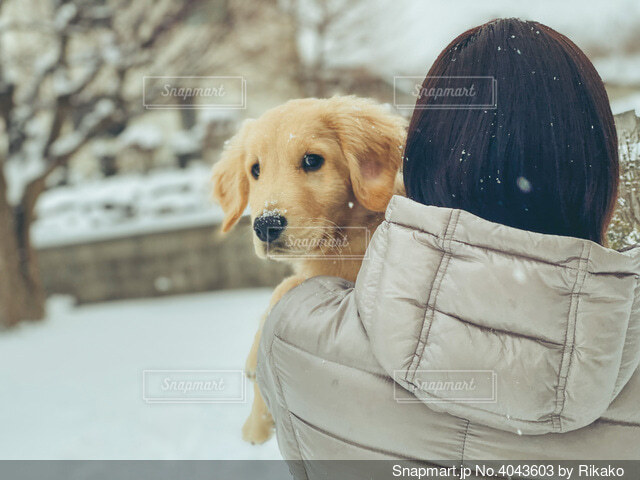 雪の中の犬の写真・画像素材[4043603]