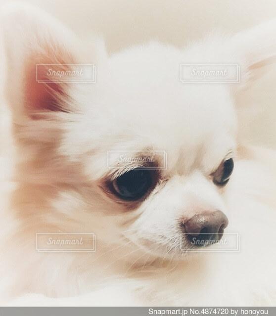 愛犬の写真・画像素材[4874720]