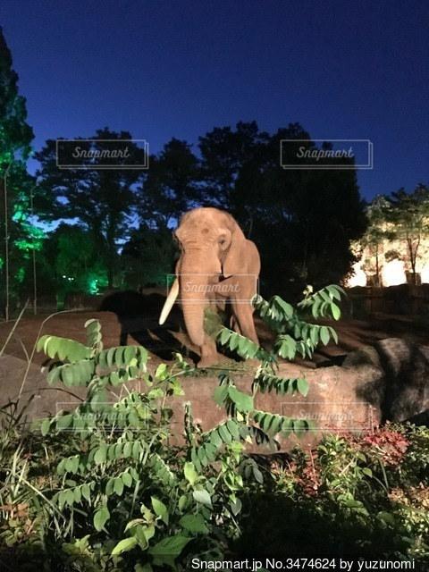 夜の動物園の写真・画像素材[3474624]