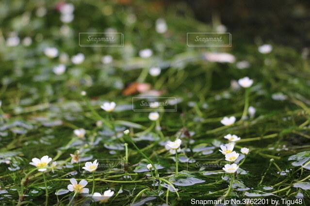 花のクローズアップの写真・画像素材[3762201]