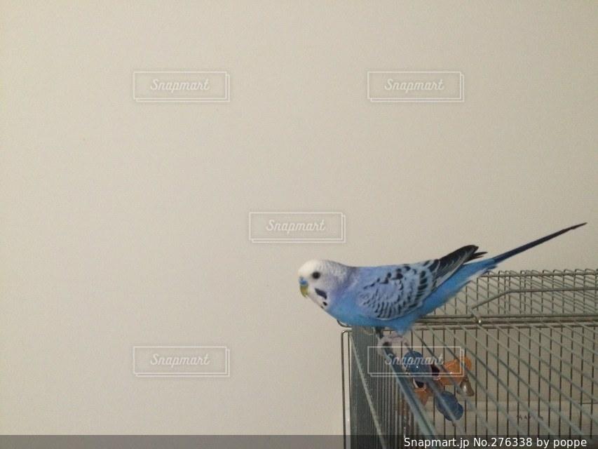 動物の写真・画像素材[276338]