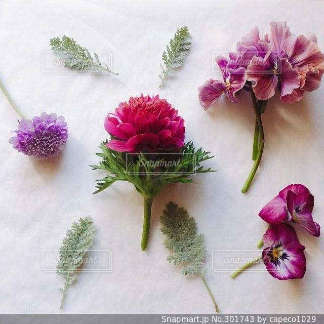 花の写真・画像素材[301743]