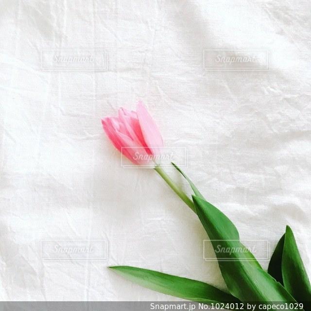 緑の葉とピンクの花の写真・画像素材[1024012]