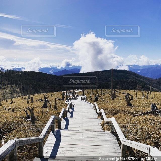 秋空 冬空の晴れた山道 鹿に刈り取られた木々の写真・画像素材[4875441]