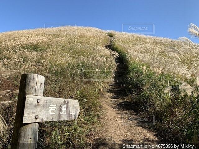 岩湧山の山頂に続くススキの道の写真・画像素材[4875896]