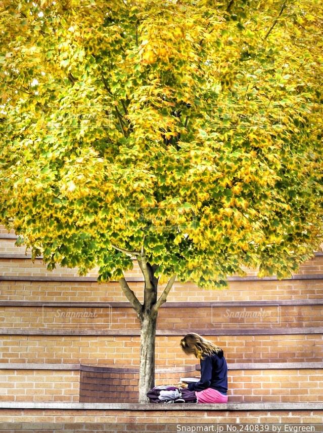 黄色に色付いた木の下で本を読んでいる大学生の写真・画像素材[240839]