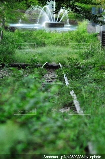 緑に囲まれた廃線と噴水の写真・画像素材[3693886]