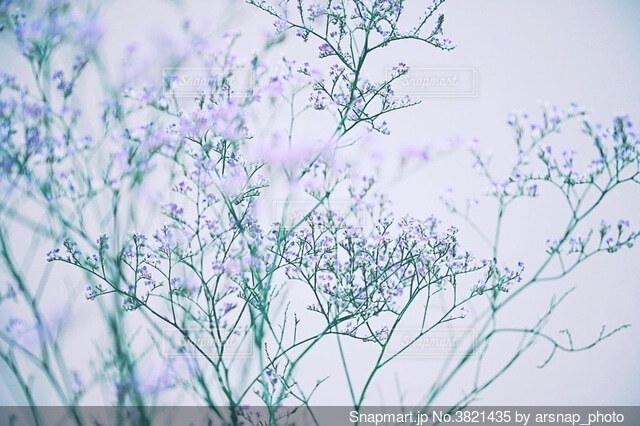 幻想的な紫色の花の写真・画像素材[3821435]