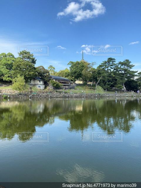 癒しの猿沢池の写真・画像素材[4771973]