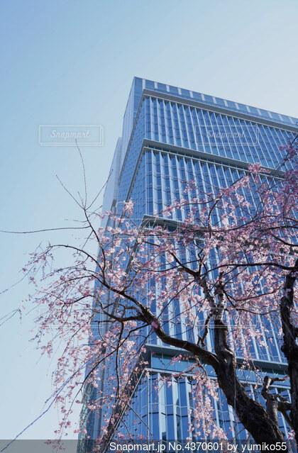 高いビルと桜の写真・画像素材[4370601]