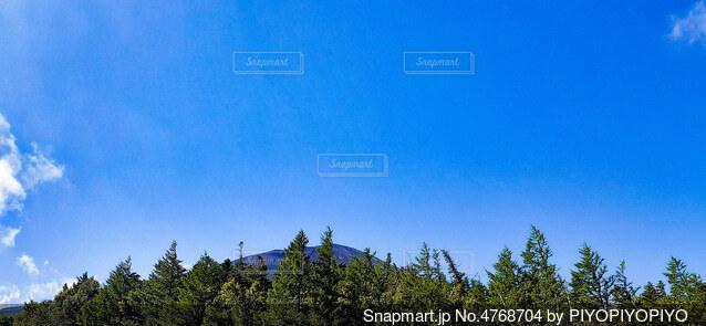 木のクローズアップの写真・画像素材[4768704]