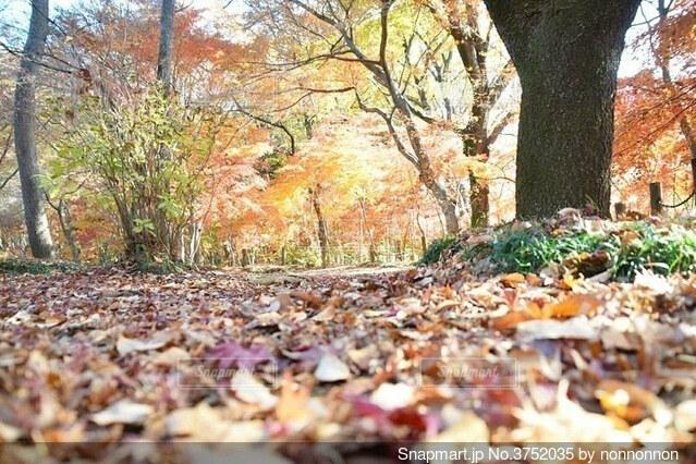 紅葉も落ち葉との写真・画像素材[3752035]