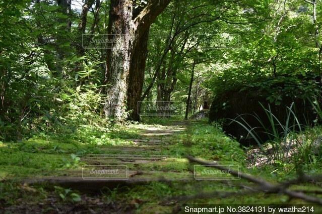 森の中の歩道の写真・画像素材[3824131]