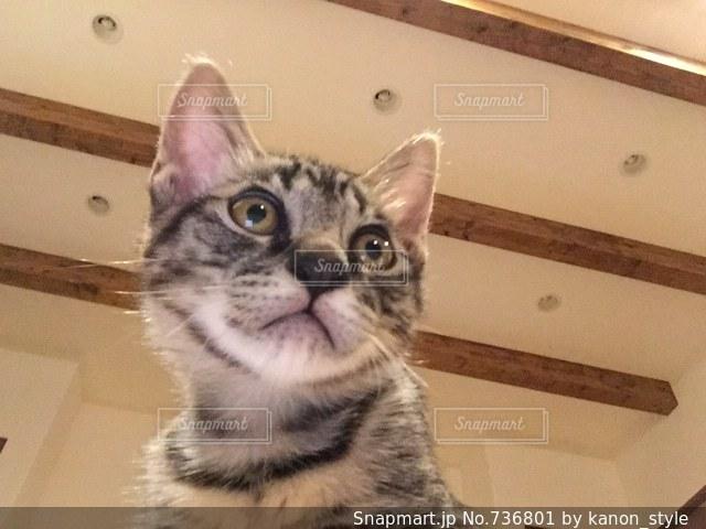 カメラにポーズを鏡の前で座っている猫の写真・画像素材[736801]