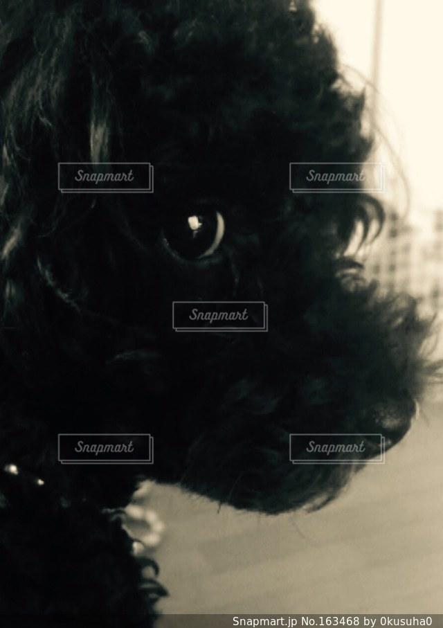 犬の写真・画像素材[163468]