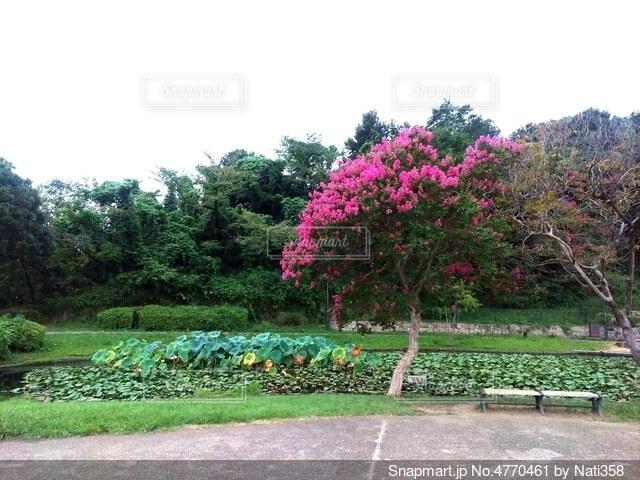 公園のベンチと池とキレイな樹木の写真・画像素材[4770461]