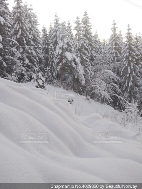 北欧の山林の雪景色の写真・画像素材[4029320]