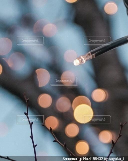 2月のイルミネーションの写真・画像素材[4158432]