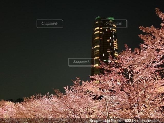 ライトアップされた桜花が都会を美しく彩る一夜の写真・画像素材[4411533]