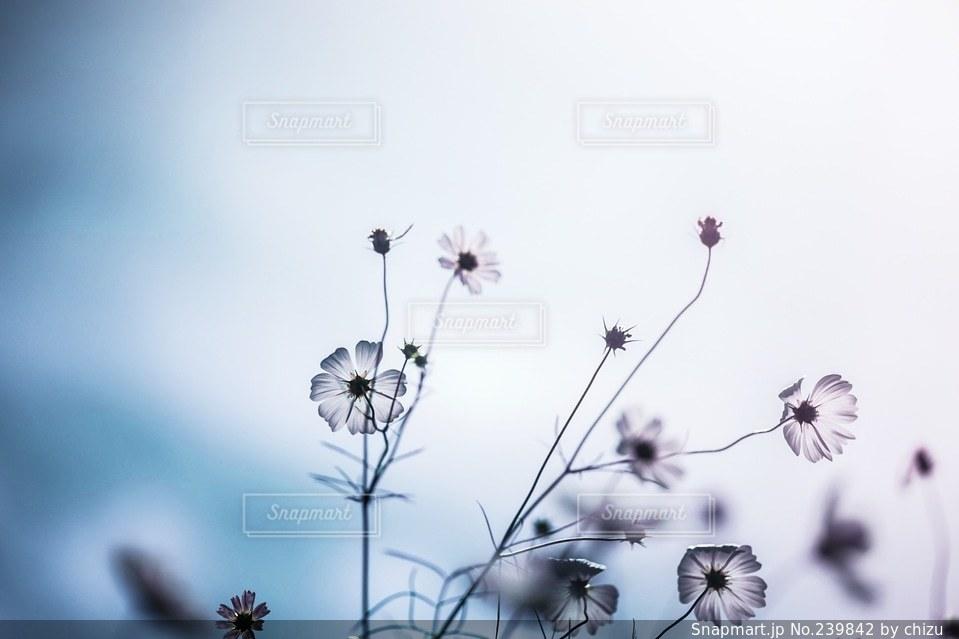 自然の写真・画像素材[239842]