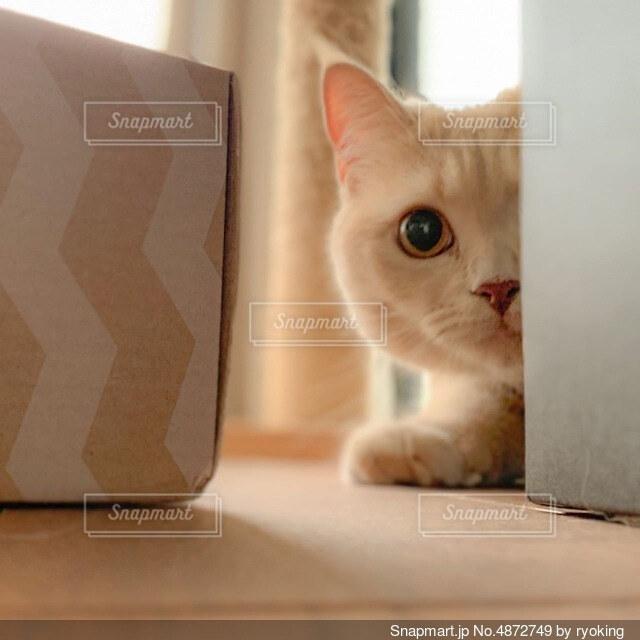箱の後ろで見つめる猫の写真・画像素材[4872749]