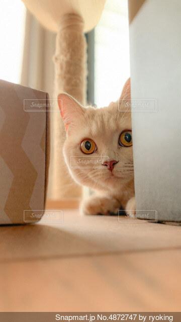 箱の後ろに隠れる猫の写真・画像素材[4872747]