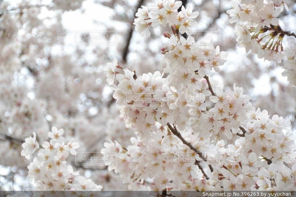 自然の写真・画像素材[396263]