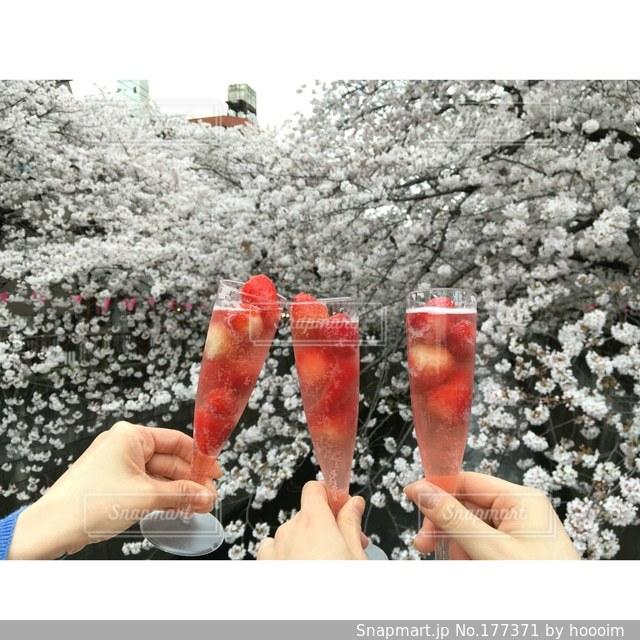 飲み物,スイーツ,自然,風景,桜,お酒,ピンク,いちごの写真素材