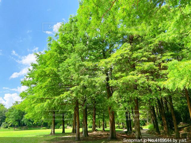 木々の緑の写真・画像素材[4169644]