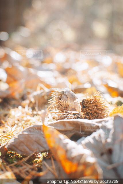 秋の風景と栗との写真・画像素材[4219896]