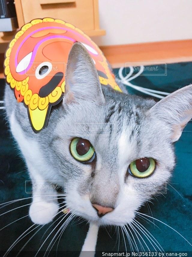 猫,猫が好き,ねこ,可愛い,節分,節分の日