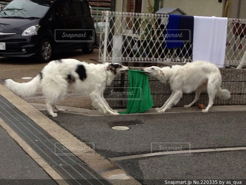 犬の写真・画像素材[220335]
