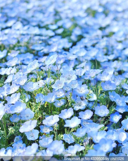 花のクローズアップの写真・画像素材[4339505]