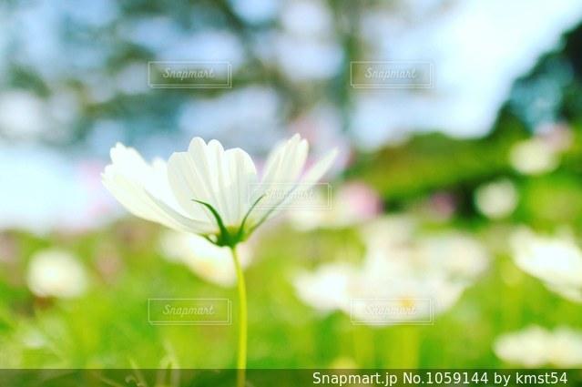 花のアップの写真・画像素材[1059144]