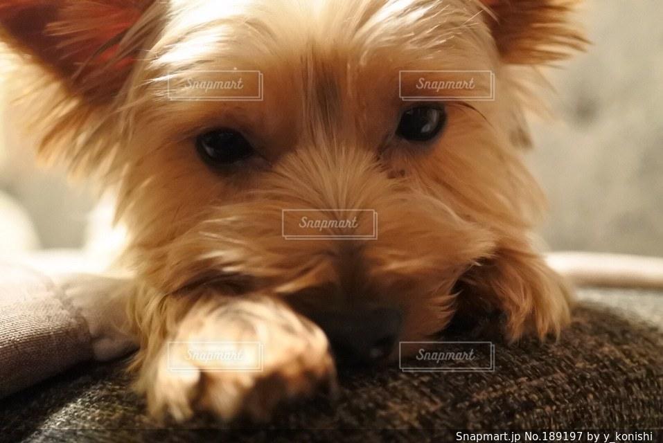 犬の写真・画像素材[189197]