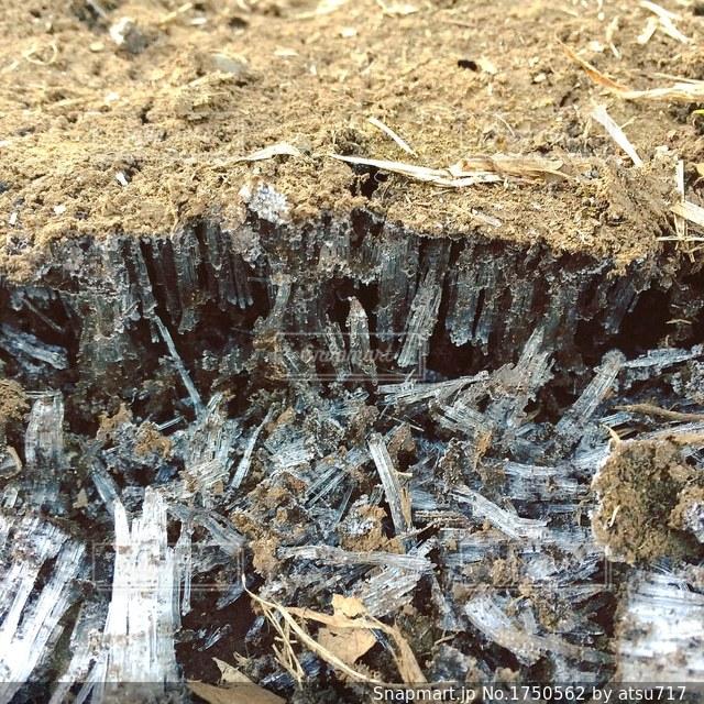 霜柱の写真・画像素材[1750562]