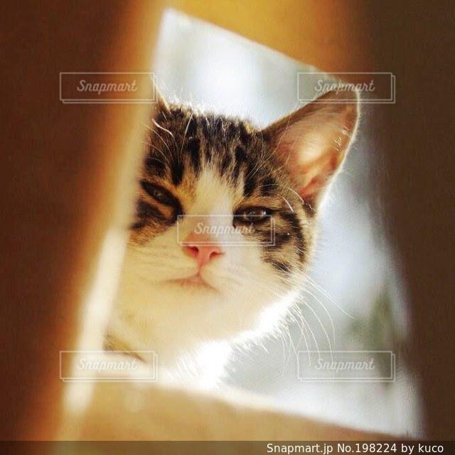 猫の写真・画像素材[198224]