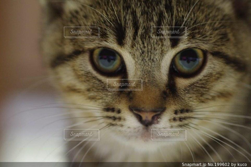猫の写真・画像素材[199602]