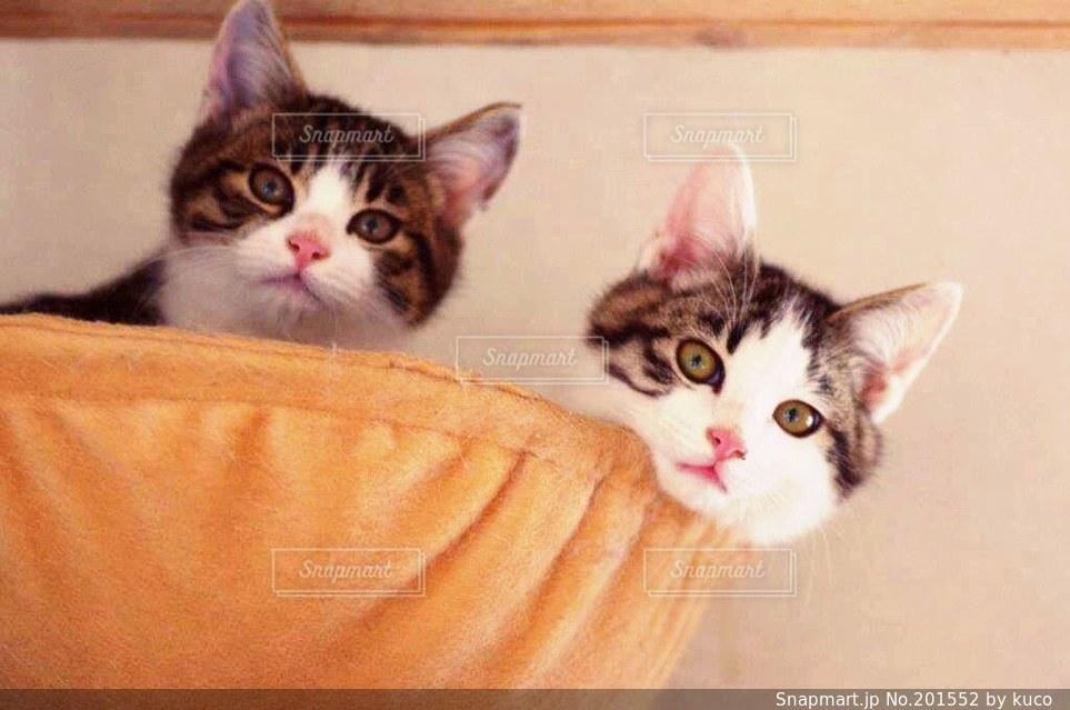 猫の写真・画像素材[201552]