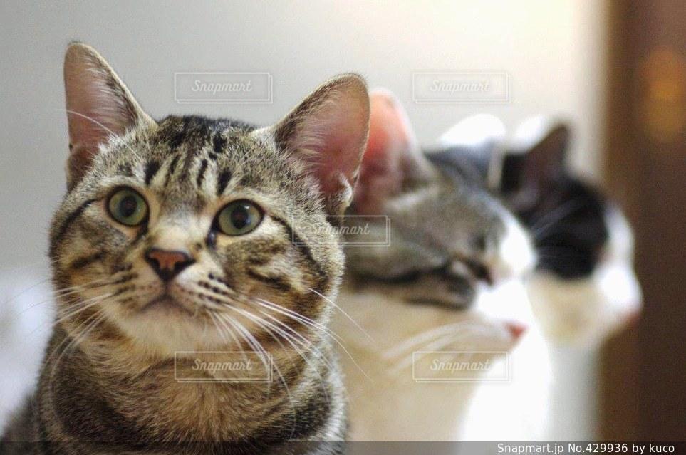 猫 - No.429936