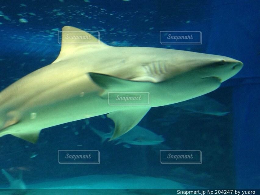 サメの写真・画像素材[204247]